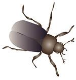 Illustrationer insekter